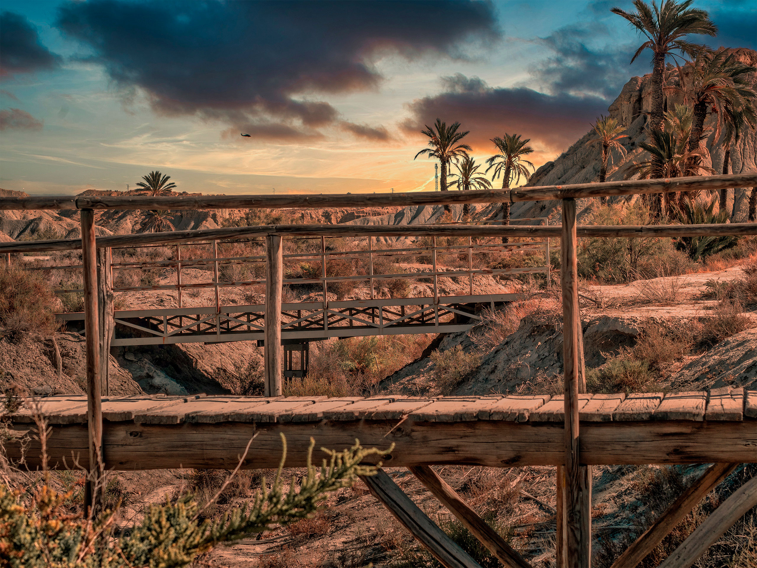 desierto de tabernas fauna